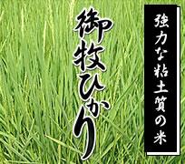 強力な粘土質の米長野県産コシヒカリ御牧ひかり