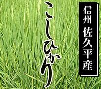 長野県 佐久市産 コシヒカリ