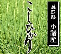 長野県小諸産